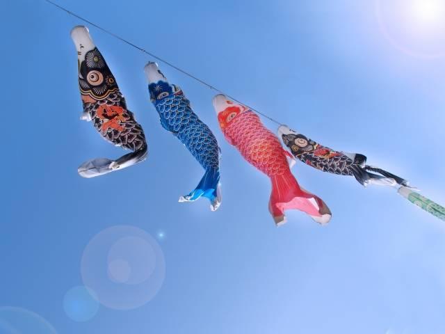 「鯉のぼり」に関する写真|写真素材なら「写真AC」無料(フリー)ダウンロードOK (31248)