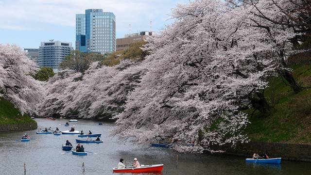 Free photo: Boat, Cherry Blossom, Park, River - Free Image on Pixabay - 1835081 (33699)
