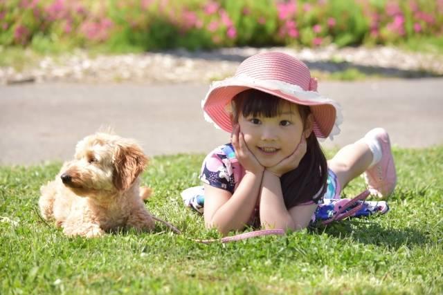 「犬」に関する写真|写真素材なら「写真AC」無料(フリー)ダウンロードOK (46524)