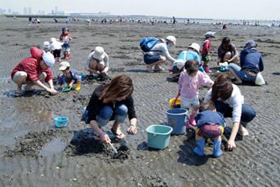 ふなばし三番瀬海浜公園:潮干狩りのご案内 (50157)