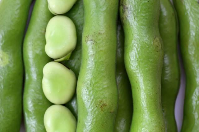 「空豆」に関する写真|写真素材なら「写真AC」無料(フリー)ダウンロードOK (52853)