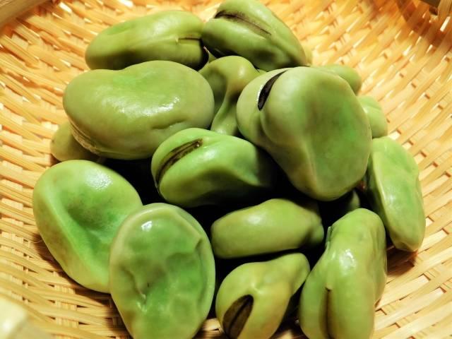 「そら豆」に関する写真|写真素材なら「写真AC」無料(フリー)ダウンロードOK (53036)