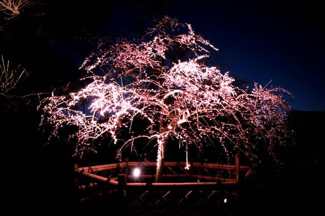 偕楽園フォトアルバム/茨城県 (100998)