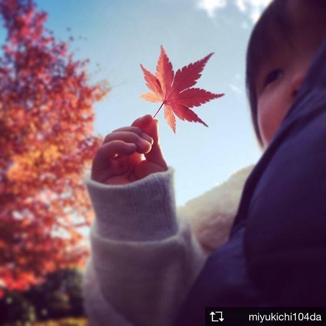 #秋見つけた #紅葉 #須磨離宮公園