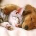 初めてペットを飼う前に考えたい4つのこと☆ - ikumama