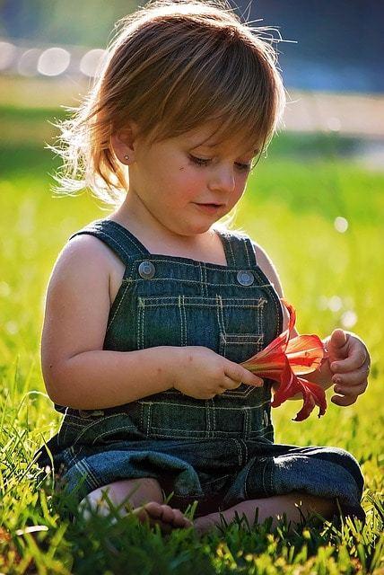 Free photo: Girl, Sitting, Flower, Red, Baby - Free Image on Pixabay - 757441 (7836)