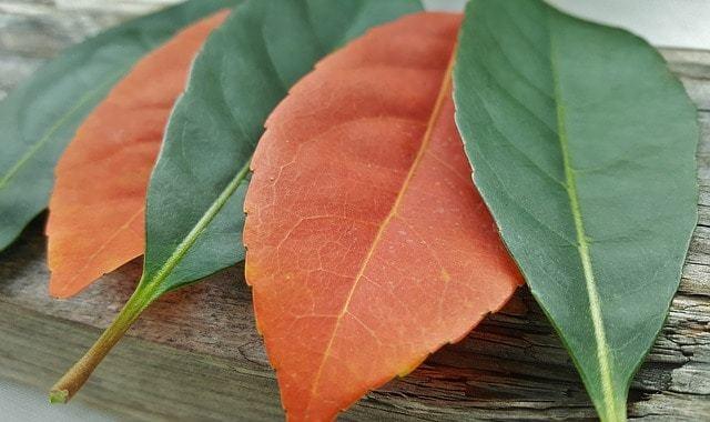 Free photo: Leaves, Fall, Fall Colors, Autumn - Free Image on Pixabay - 1380698 (9817)