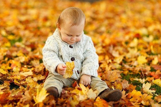 Free photo: Autumn, Fall, Baby Boy, Child, Cute - Free Image on Pixabay - 165184 (9910)