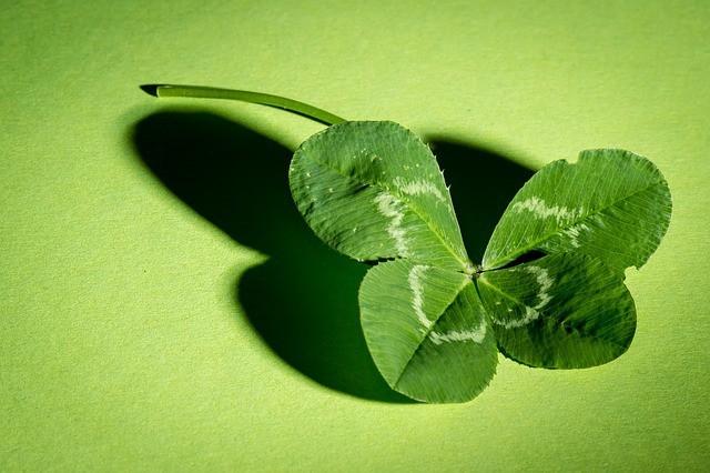 Free photo: Klee, Four Leaf Clover, Green - Free Image on Pixabay - 941597 (11870)