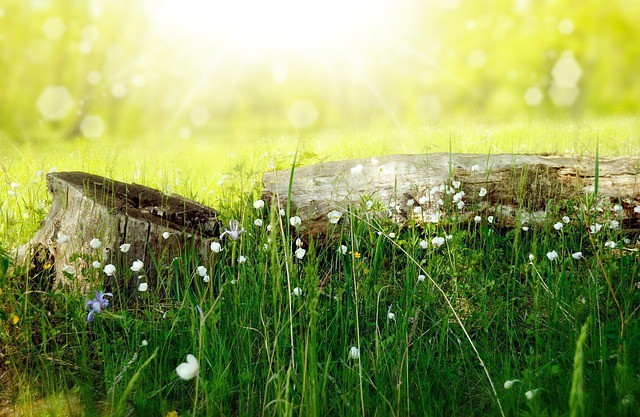Free photo: Flowers, Meadow, Wood, Forest, Sun - Free Image on Pixabay - 164754 (13517)