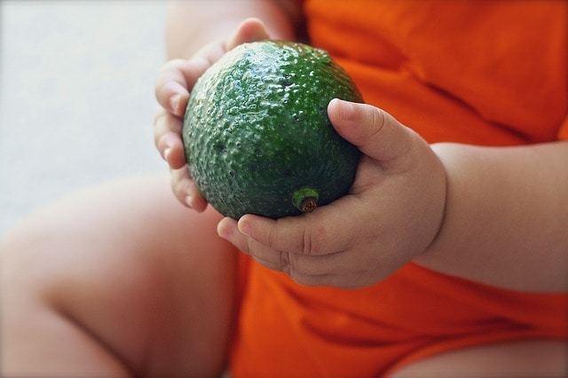 Free photo: Avocado, Fruit, Baby, Food, Diet - Free Image on Pixabay - 1476494 (13873)