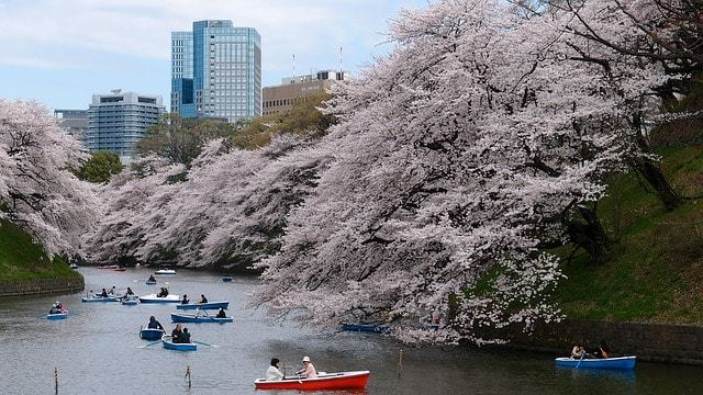 Free photo: Boat, Cherry Blossom, Park, River - Free Image on Pixabay - 1835081 (13894)