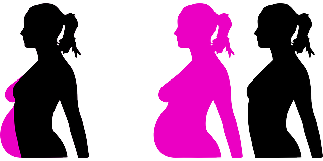 Free vector graphic: Pregnancy, Reproduction, Months - Free Image on Pixabay - 23889 (14774)