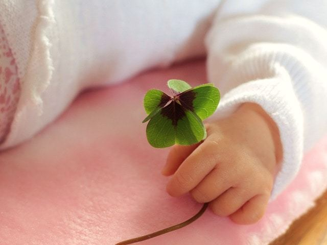 Free photo: Four Leaf Clover, Luck, Baby - Free Image on Pixabay - 1892660 (15468)