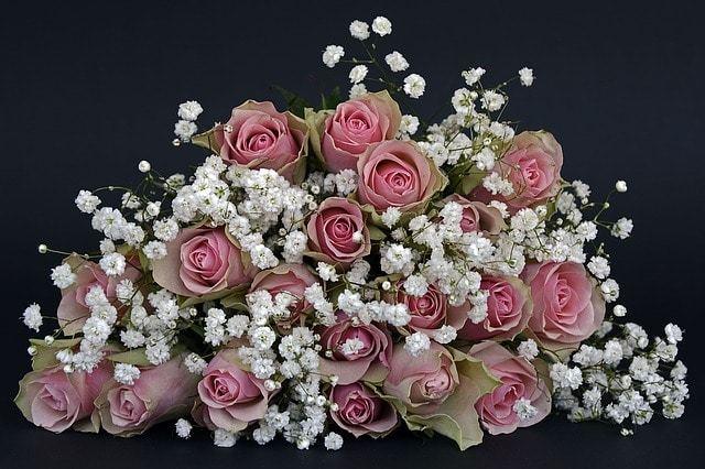 Free photo: Roses, Rose Flower, Flowers, Pink - Free Image on Pixabay - 1420719 (15550)