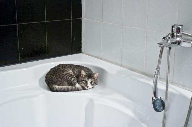 Free photo: Cat, Bathroom, Shower Head - Free Image on Pixabay - 1052060 (20341)