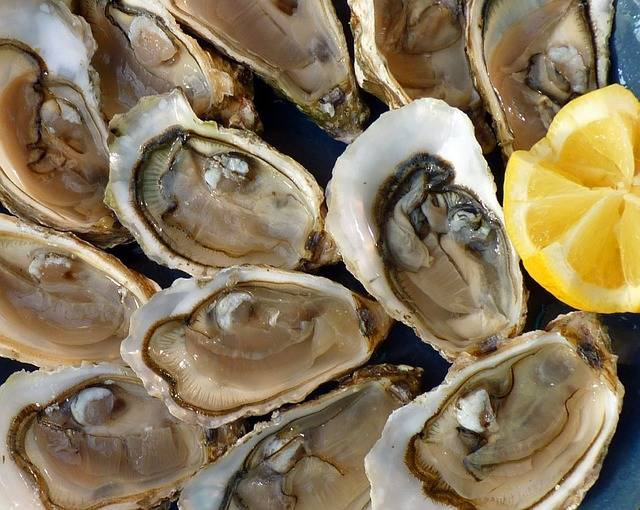 Free photo: Oysters, Holidays, Sea, The Sea - Free Image on Pixabay - 1958668 (24095)