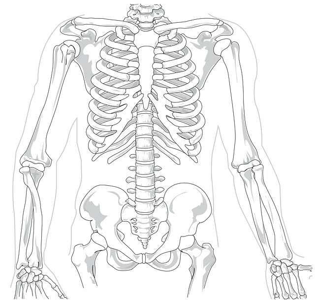 Free vector graphic: Skeleton, Human, Diagram, Backache - Free Image on Pixabay - 41569 (24325)