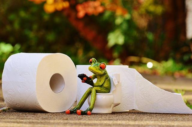 Free photo: Frog, Toilet, Loo, Session, Funny - Free Image on Pixabay - 1037252 (26775)
