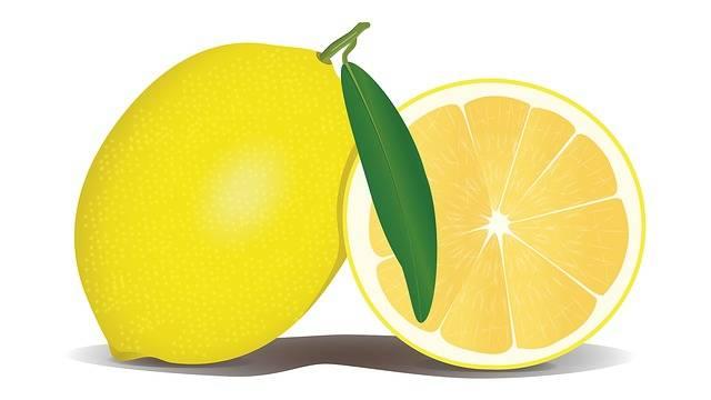 Free illustration: Lemon, Fruit, Yellow, Citrus - Free Image on Pixabay - 756390 (27152)