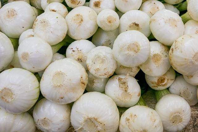 Free photo: Onions, Young Onions, Vegetables - Free Image on Pixabay - 1558656 (30711)