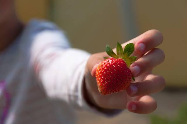 Free photo: Strawberries, Hand, Child, Fruit - Free Image on Pixabay - 1955280 (31208)