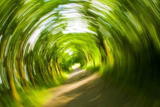 Free photo: Trees, Away, Nature, Eddy, Turn - Free Image on Pixabay - 358418 (32688)