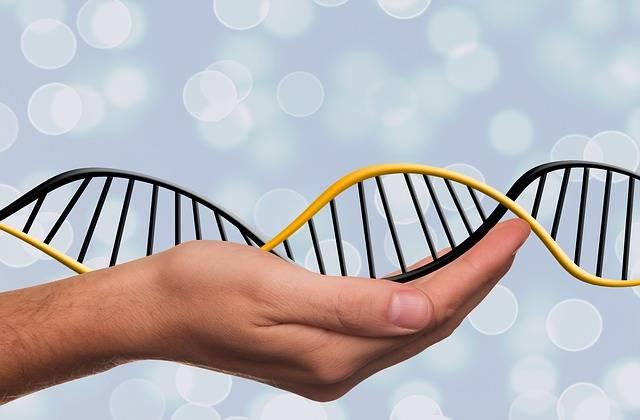 Free illustration: Dna, Deoxyribonucleic Acid, Dns - Free Image on Pixabay - 1500076 (35725)