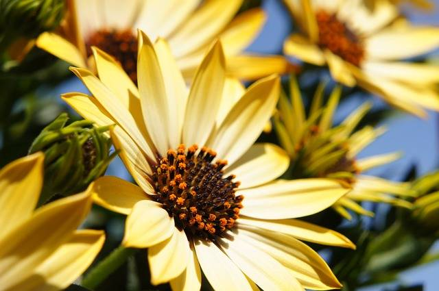 Free photo: Flower, Yellow, Spring, Sun - Free Image on Pixabay - 108685 (36583)