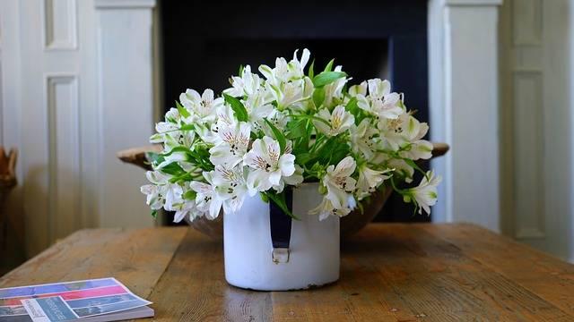 Free photo: Plant, Pot, Flower, Potted - Free Image on Pixabay - 1438317 (37109)