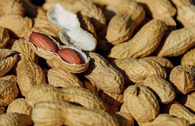 Free photo: Nuts, Peanut, Roasted, Cores, Snack - Free Image on Pixabay - 1736520 (40381)
