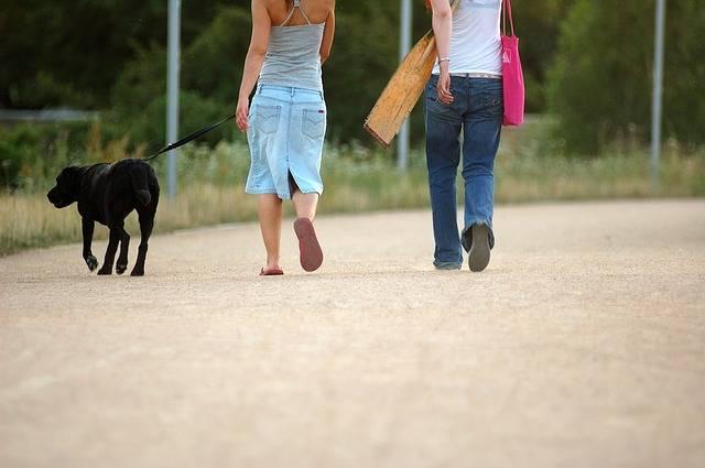 Free photo: Dog, Walking, Woman, Pet, Walk - Free Image on Pixabay - 335394 (43289)