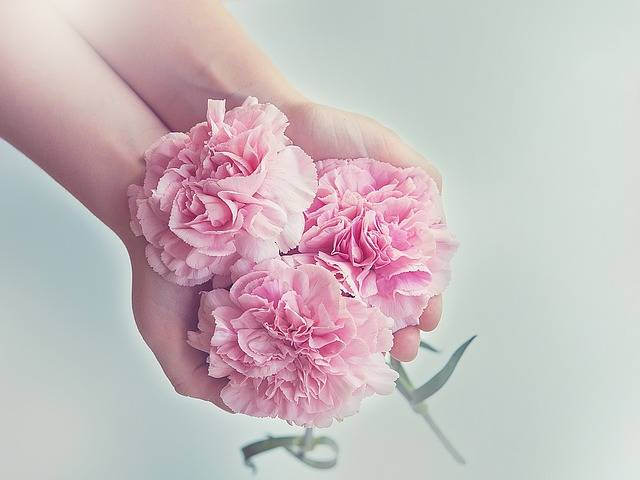 Free photo: Cloves, Flowers, Pink - Free Image on Pixabay - 1367675 (50067)