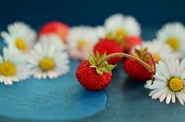 Free photo: Strawberries, Wild Strawberries - Free Image on Pixabay - 800521 (50782)
