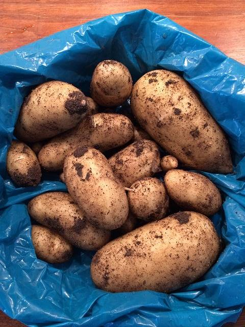 Free photo: Potato, Harvest, New Potatoes - Free Image on Pixabay - 1186511 (51868)