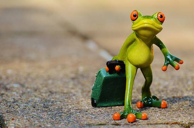 Free photo: Frog, Farewell, Travel, Luggage - Free Image on Pixabay - 897418 (57176)