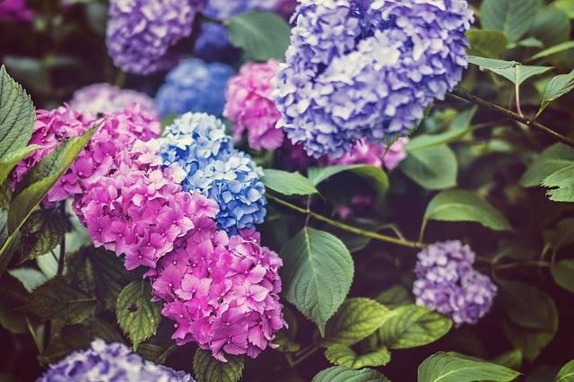 Free photo: Beautiful, Bloom, Blossom, Bright - Free Image on Pixabay - 1845599 (59559)