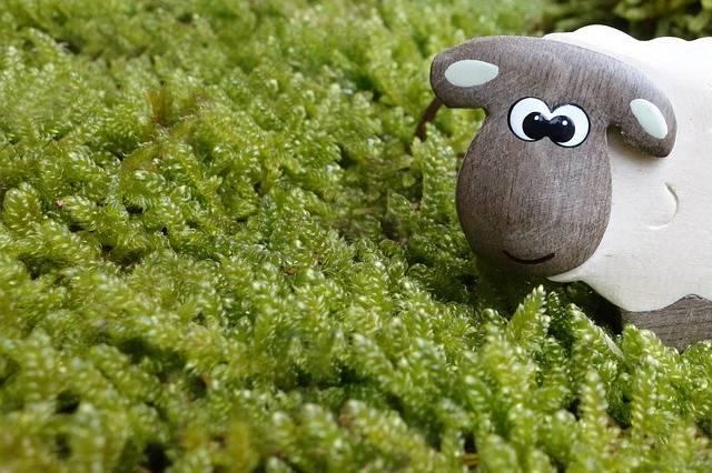 Free photo: Sheep, Moss, Meadow, Eyes, Wood - Free Image on Pixabay - 453812 (61691)