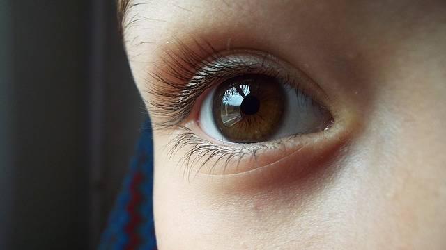 Free photo: Eye, Brown, Brown Eyes, Iris - Free Image on Pixabay - 2073566 (62601)