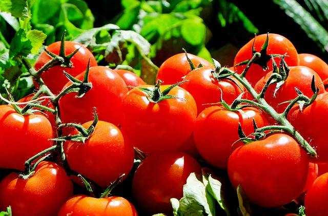 Free photo: Tomatoes, Red, Food, Frisch, Market - Free Image on Pixabay - 1280859 (62733)