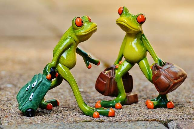 Free photo: Frogs, Funny, Travel, Luggage - Free Image on Pixabay - 897387 (64023)