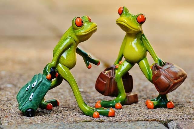 Free photo: Frogs, Funny, Travel, Luggage - Free Image on Pixabay - 897387 (64023)