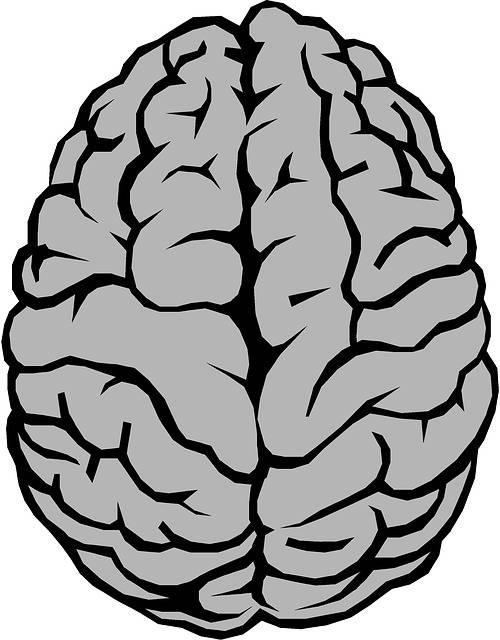Free illustration: Brain, Anatomy, Hemispheres - Free Image on Pixabay - 2183435 (64495)