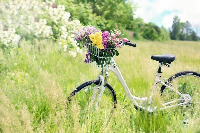 Free photo: Bicycle, Meadow, Flowers, Grass - Free Image on Pixabay - 788733 (66437)
