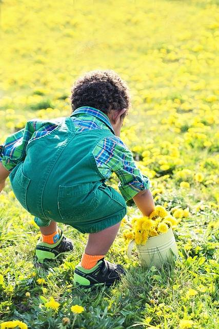 Free photo: Little Boy In Dandelions - Free Image on Pixabay - 756434 (66963)