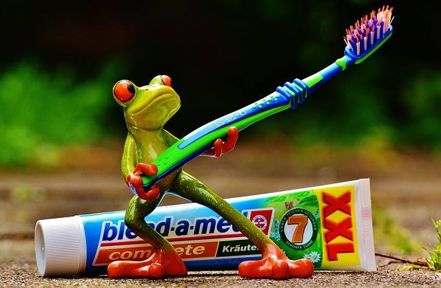 Free photo: Toothpaste, Frog, Toothbrush - Free Image on Pixabay - 1446130 (71108)