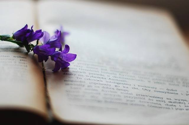 Free photo: Book, Flower, Violet, Old Book - Free Image on Pixabay - 2378479 (75034)