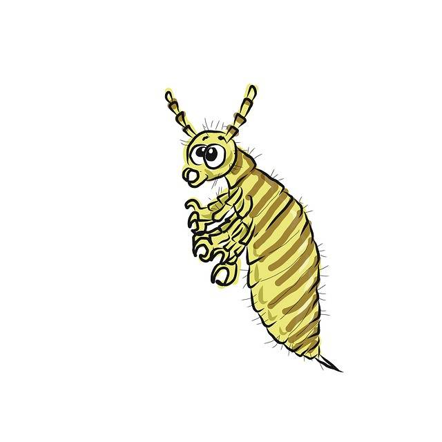 Free illustration: Lice, Insect, Parasite - Free Image on Pixabay - 2285926 (75193)