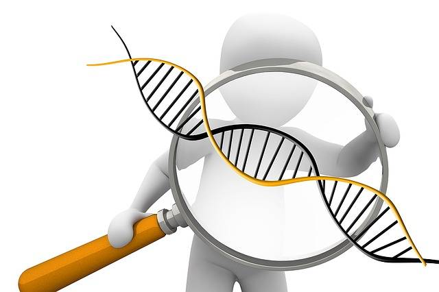 Free illustration: Deoxyribonucleic Acid, Dns - Free Image on Pixabay - 1500068 (79620)
