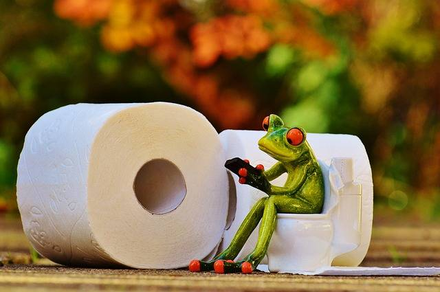 Free photo: Frog, Toilet, Loo, Session, Funny - Free Image on Pixabay - 1037247 (81582)